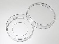 55 mm Glass Bottom Dishes
